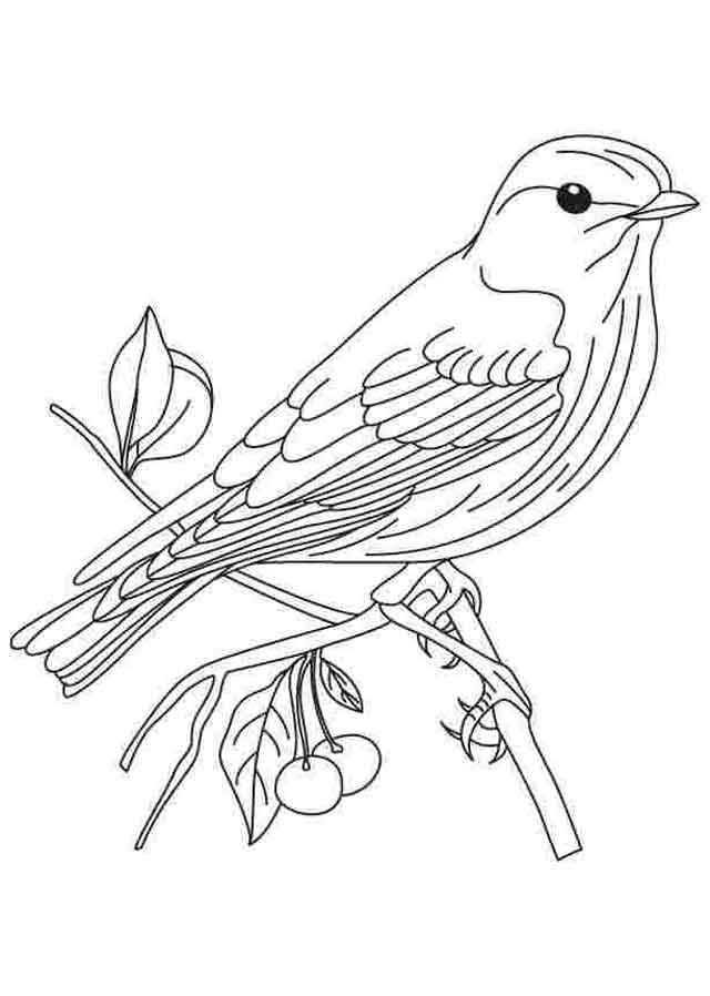 Flying Bird Coloring Pages - GetColoringPages.com | 898x640