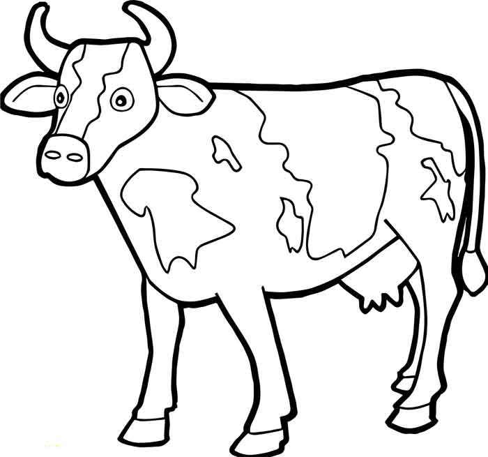 12 Best Free Printable Cow Coloring Pages For Kids And Adults