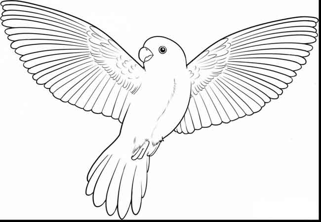 - 12 Best Free Printable Bird Coloring Pages For Kids