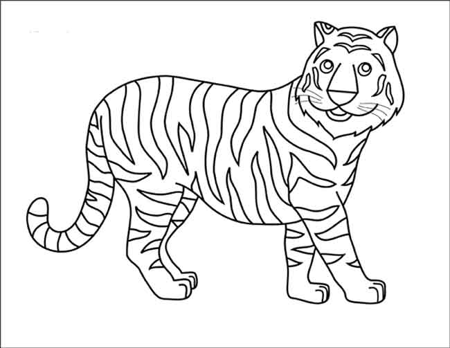 Tiger Coloring Pages   503x650