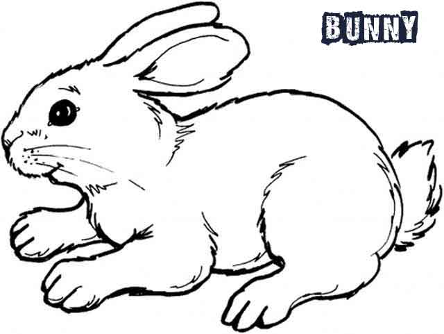 - 12 Best Free Printable Bunny Coloring Pages For Kids