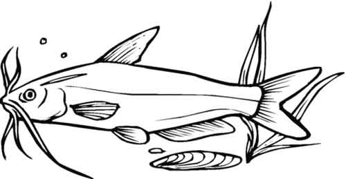 12 Best Free Printable Catfish Coloring Pages For Kids | 259x500