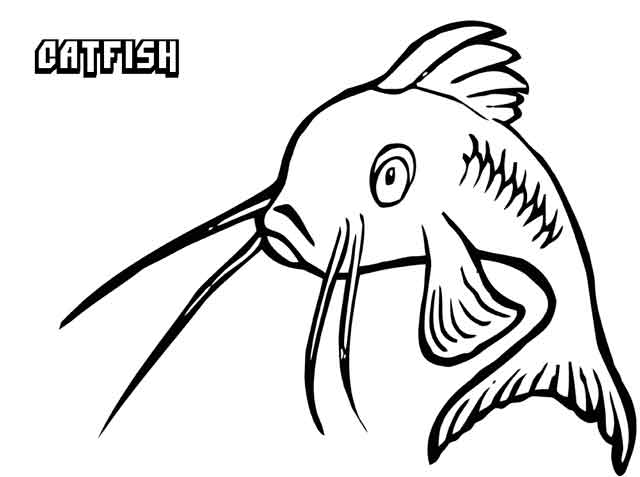 Catfish coloring pages. Download and print Catfish coloring pages. | 477x640